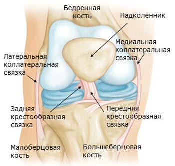 Изображение - Разрыв коленного сустава симптомы shema_svyazok_kolena_1511443754_5a16cd2a5a64f