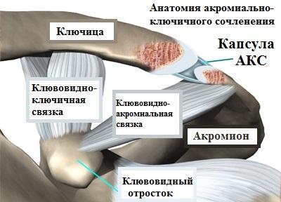 Изображение - Артрит ключичного сустава akromialno_klyuchichnoe_sochlenenie_1515729735_5a583347ee660